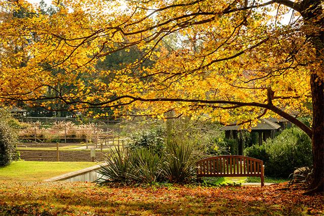 The ground of Reynolda House Museum of American Art and Reynolda Gardens, Wake Forest University