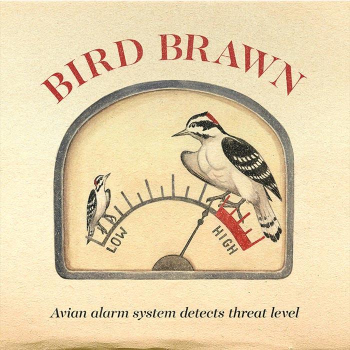 Bird Brawn