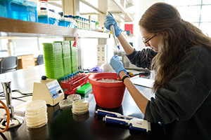 Student doing labwork with petri dishes