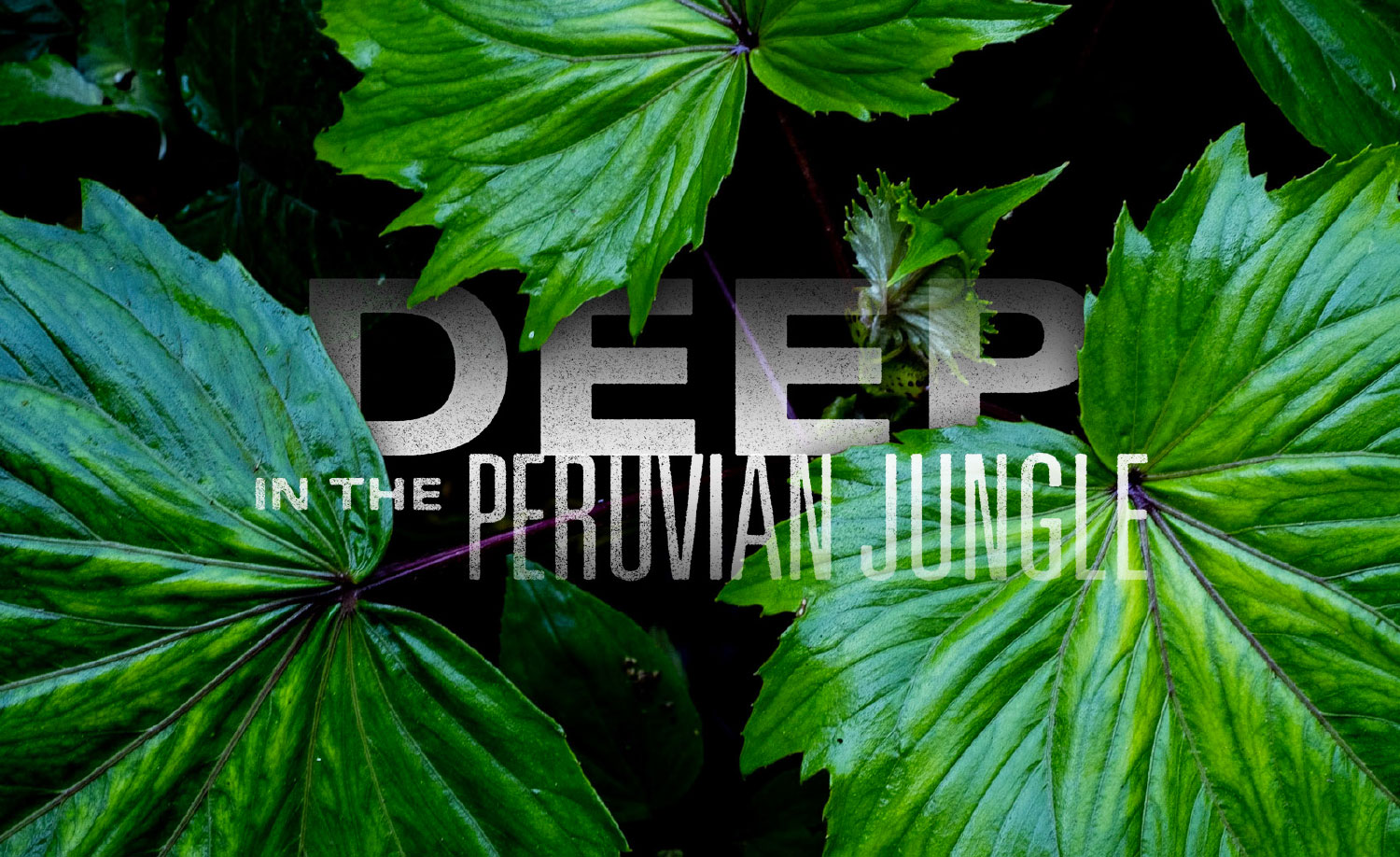Deep in the Peruvian Jungle