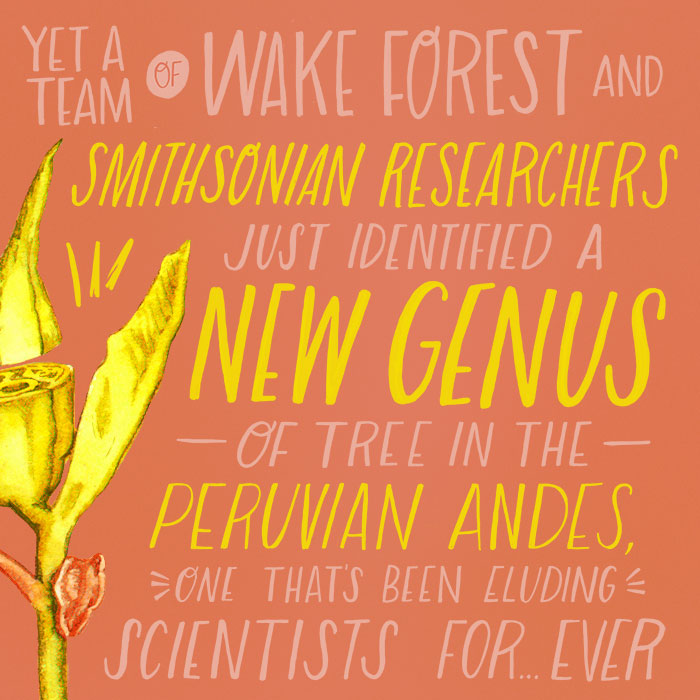 Yet a team of Wake Forest and Smithsonian researchers just identified a new genus of tree in the Peruvian Andes, one that's been eluding scientists for….ever.