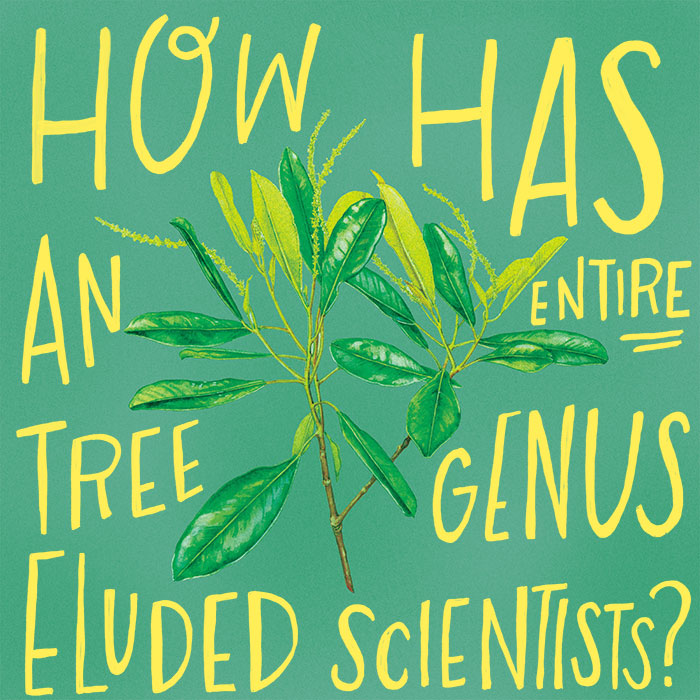 How has an entire tree genus eluded scientists?