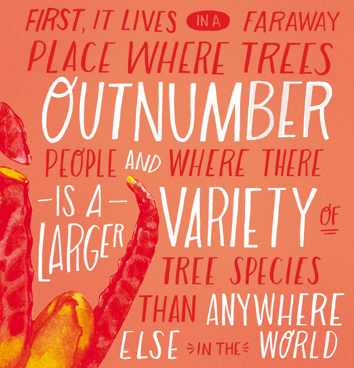 It lives far away, in a place where trees outnumber people, and where there is a larger variety of tree species than anywhere else in the world.