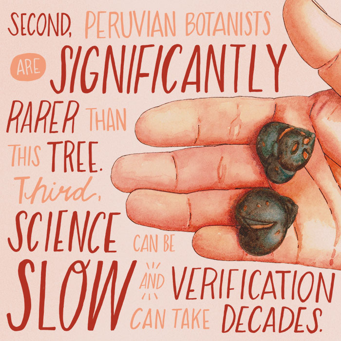Peruvian?botanists?are significantly rarer than this?tree. Science can be slow, and verification can take decades.