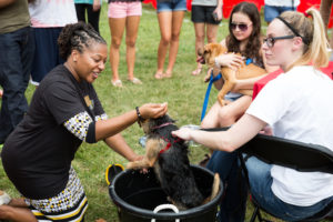 Students and staff pet animals at a stress-less event.