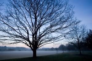 mist field