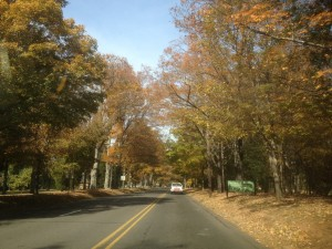 reynolda road fall 2013