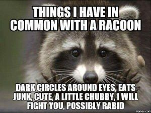 Finals week meme: things I have in common with a raccoon: dark circles around eyes, eat junk, a little chubby, I will fight you, possibly rabid
