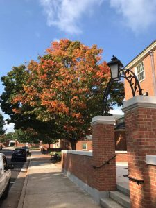 pretty fall leaves outside of Poteat Hall