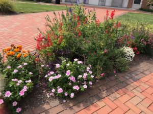 pretty flowers outside Farrell Hall