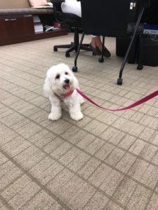 Phoebe the dog
