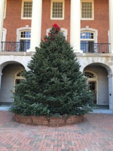 Christmas tree outside of Reynolda Hall