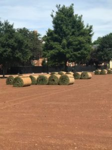 Giant wheels of sod waiting to be placed on the Quad