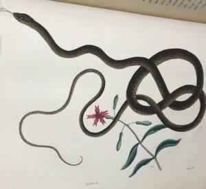Beautiful snake painting