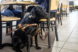 Enzo the service dog