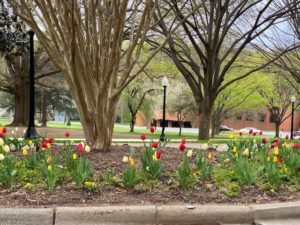 tulips by Scales Fine Arts Center