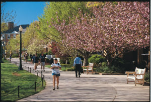 A student looks at her mail as she walks down the tree-lined Quad at Wake Forest University. ©2002 Wake Forest University Office of Creative Services. Photo by Ken Bennett.