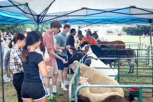 The University Counseling Center hosts a stress relief petting zoo on Manchester plaza on Monday, September 30, 2019.