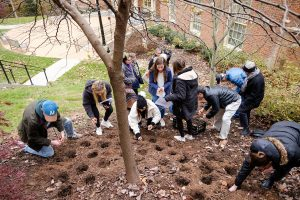Members of the Wake Forest community participate in the worldwide Daffodil Project, planting daffodils outside the Byrum Welcome Center to honor the memories of the 1.5 million children who perished in the Holocaust, on the campus of Wake Forest University, Thursday, November 14, 2019. The group plants 200 daffodil bulbs.