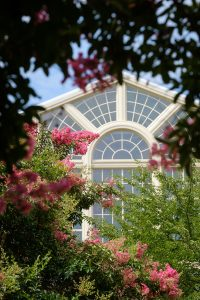 Crepe myrtles bloom on Manchester Plaza, on the campus of Wake Forest University, Tuesday, Ju
