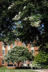 Crepe myrtles bloom on Manchester Plaza, on the campus of Wake Forest University, Tuesday, July 21, 2020.