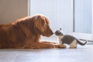 dog and kitten meeting