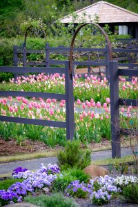 Flowers bloom in Reynolda Gardens, on the campus of Wake Forest University, Thursday, April 29, 2021.