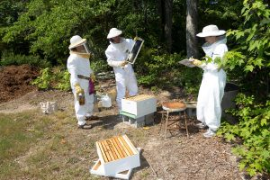Wake Forest biology professor Susan Fahrbach works with junior Andrea Beck ('13) and beekeeper Erika Vandeman at one of their field research sites in Winston-Salem, NC, on Wednesday, June 15, 2011. Fahrbach studies the neurology and behavior of honeybees.
