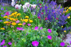 a beautiful garden with perennial flowers