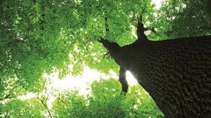 Green Tree Perspective Image