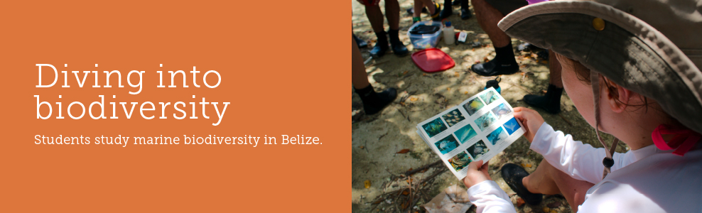 Student Research, Diving into Biodiversity, Belize