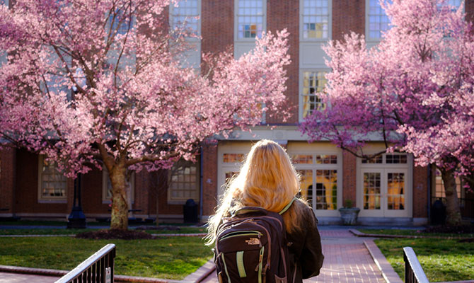 Students walk through Tribble Courtyard past early-blooming fruit trees