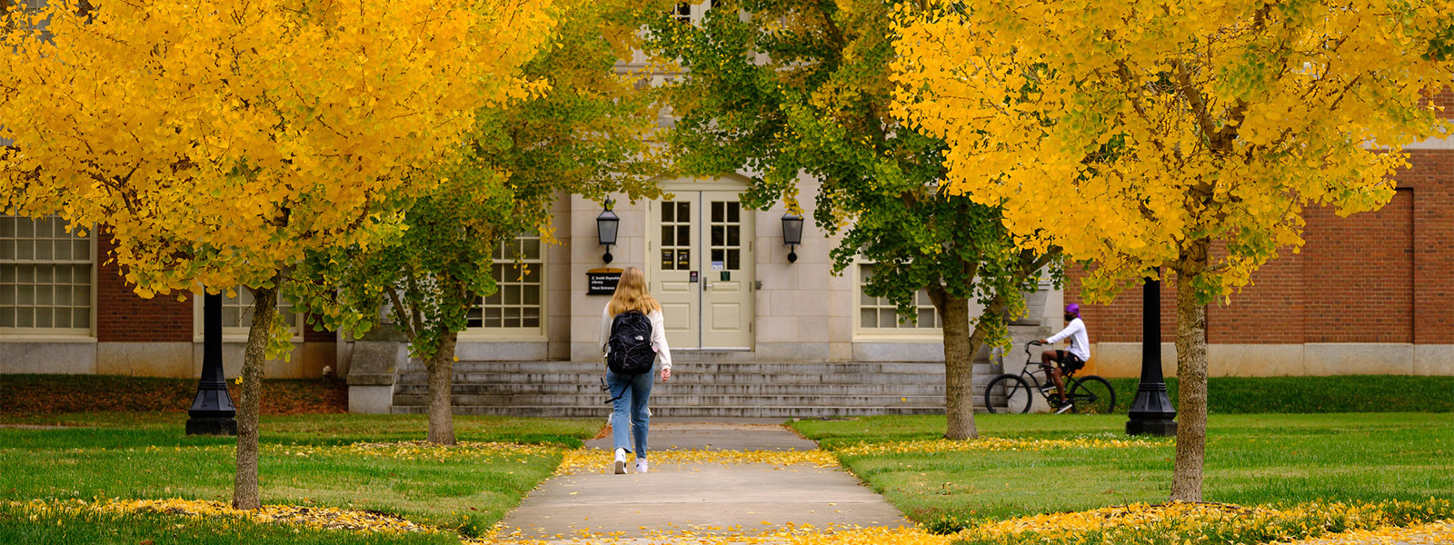 Wake Forest students walk through a tunnel of bright yellow gingko trees on their way to the library.