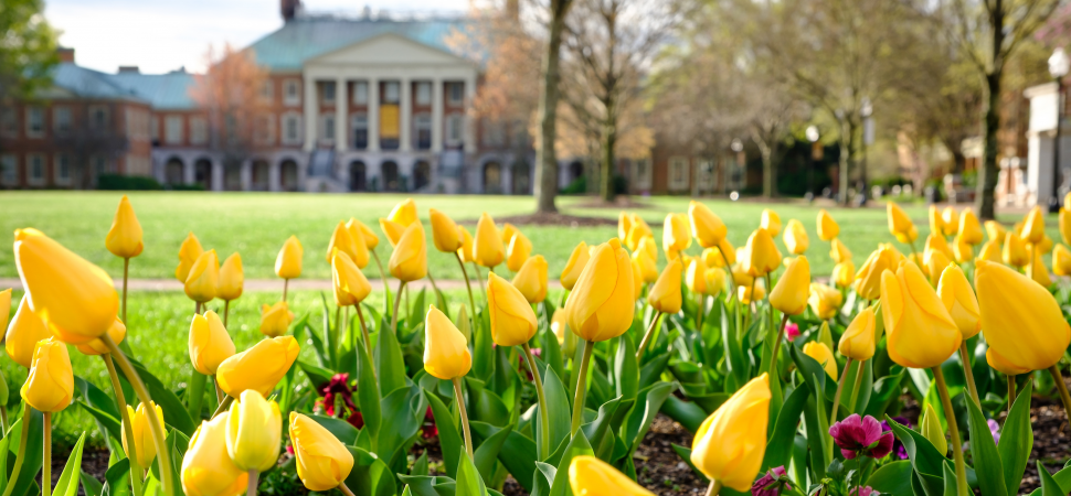 Daffodils bloom in front of Reynolda Hall, which is visible from the distance.