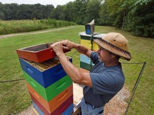 Beekeeper David Link