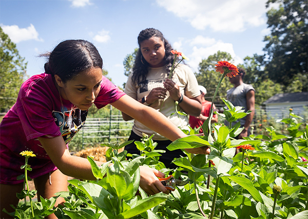 First Year students work together in the campus garden, cutting a zinnia