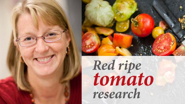 Gloria Muday, tomato research
