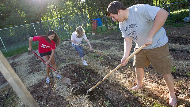 Wake Forest students gardening