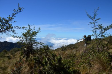 At high elevations, cloud forest trees quickly transition to grassland.