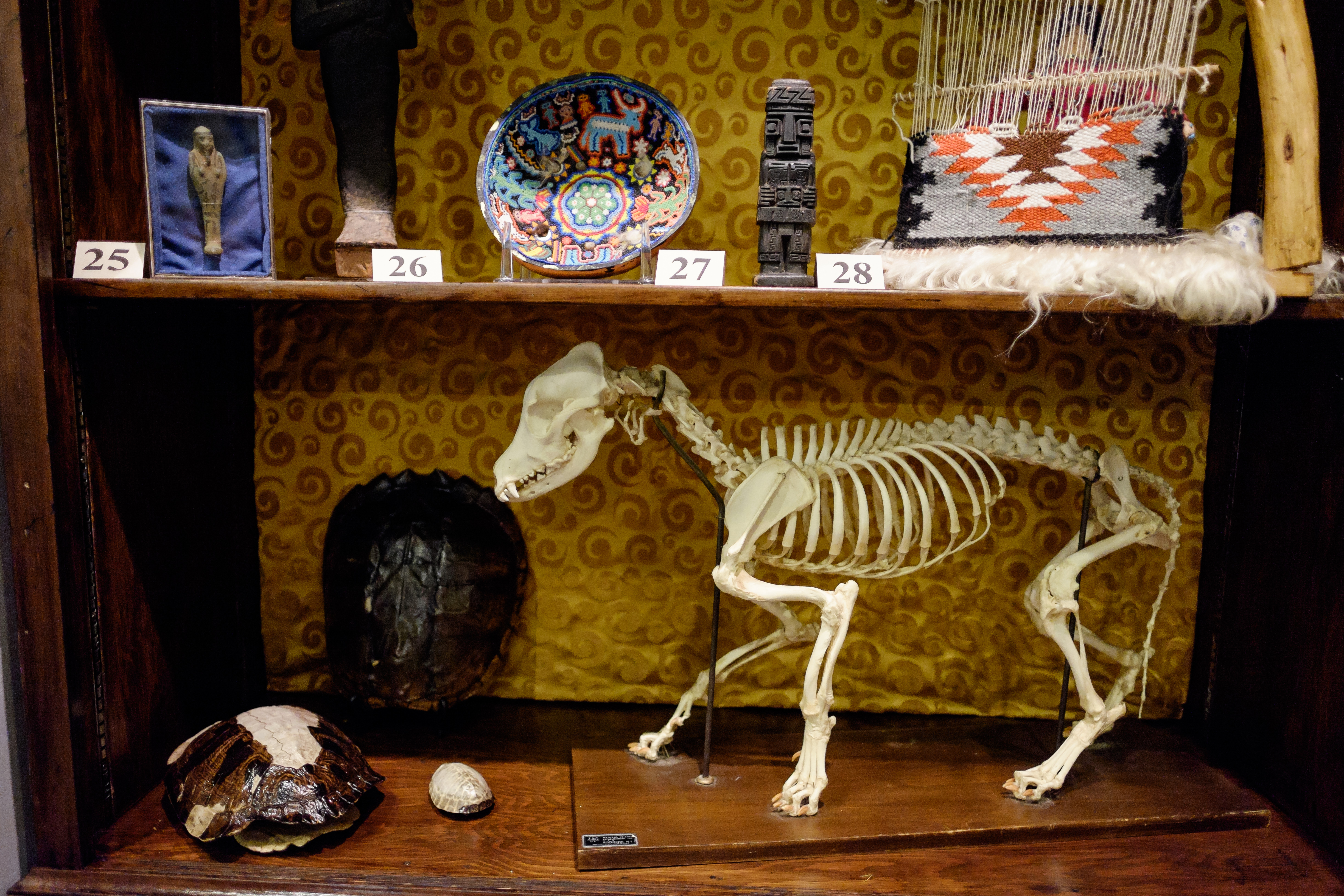 Cabinet Of Curiosities Source · Cabinet Of Curiosities Wake Forest News