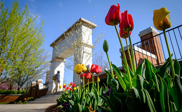 Tulips bloom in front of the stone arch at the entrance to Hearn Plaza Thursday, April 12, 2018.