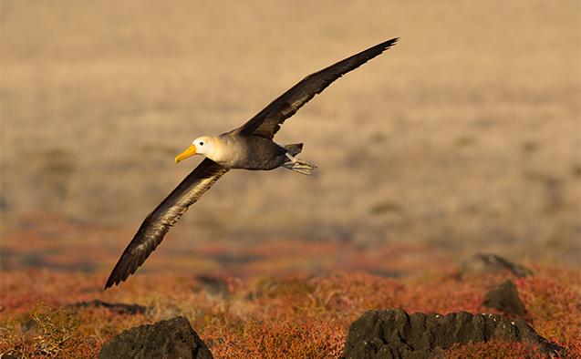 Albatross photo