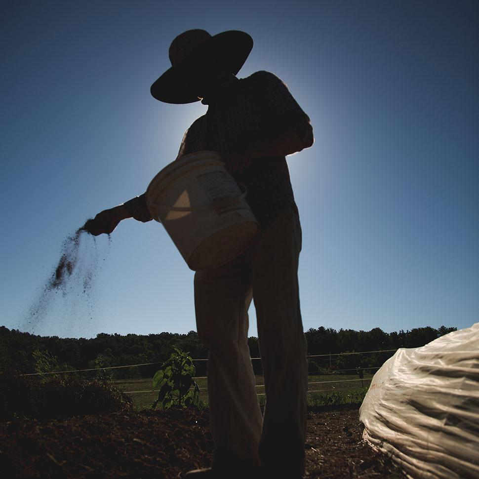 sowing fhew kalliopeia grant 2018