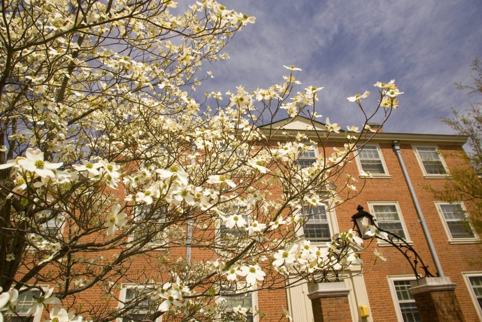 Huffman Residence Hall with blooming tree