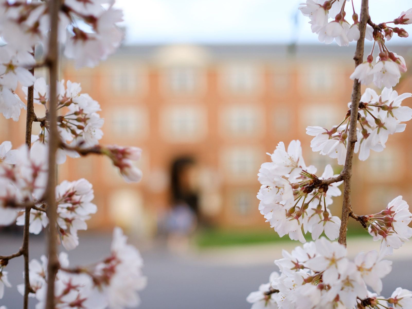 Spring blossoms outside of an entrance to Taylor residence hall