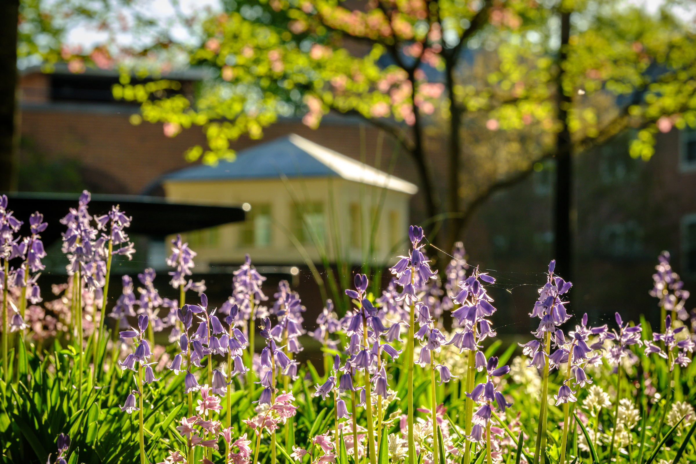 Spring flowers bloom in front of Luter Residence Hall
