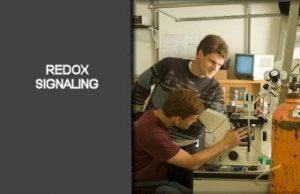 Redox Signaling