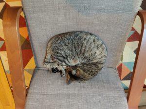 renton the cat