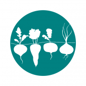 STEM from the Roots Icon