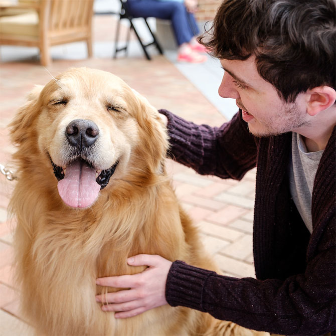 Therapy dogs visit Farrell Hall on the Wake Forest campus to provide stress relief for students